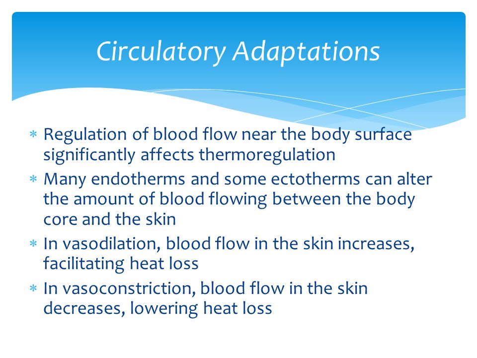  Regulation of blood flow near the body surface significantly affects thermoregulation  Many endotherms and some ectotherms can alter the amount of