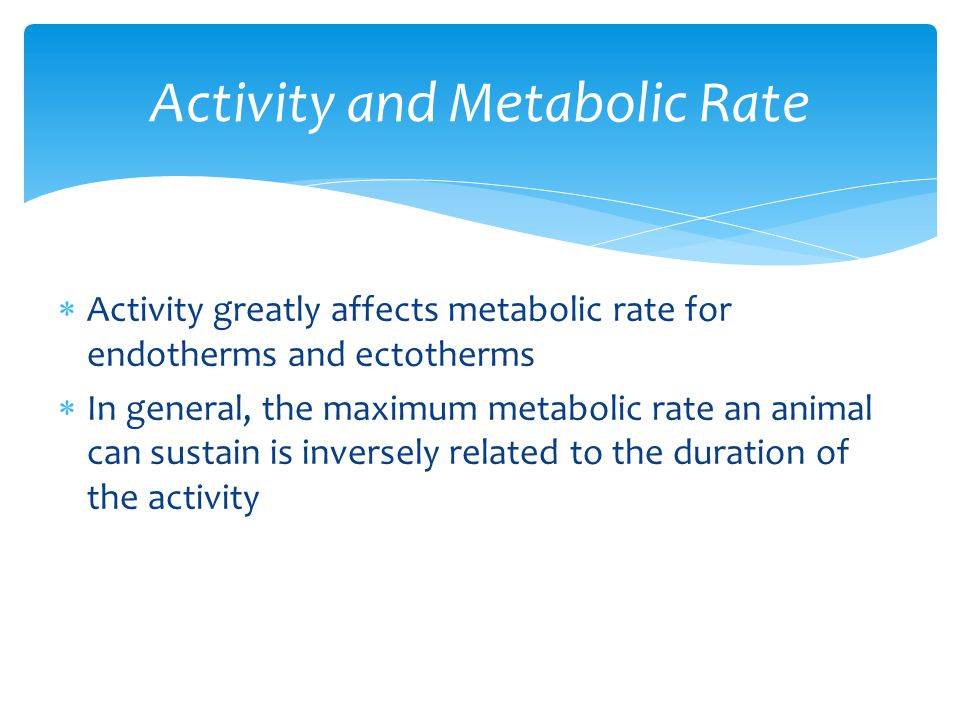  Activity greatly affects metabolic rate for endotherms and ectotherms  In general, the maximum metabolic rate an animal can sustain is inversely re