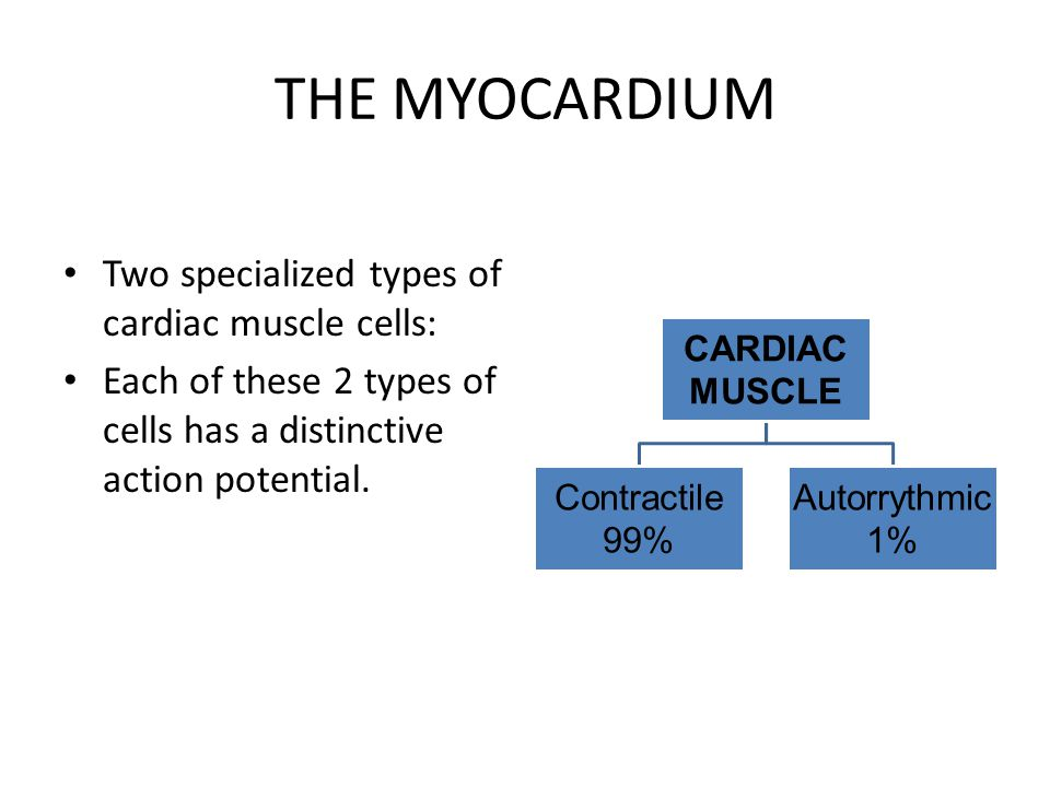 THE MYOCARDIUM Two specialized types of cardiac muscle cells: Each of these 2 types of cells has a distinctive action potential. CARDIAC MUSCLE Contra