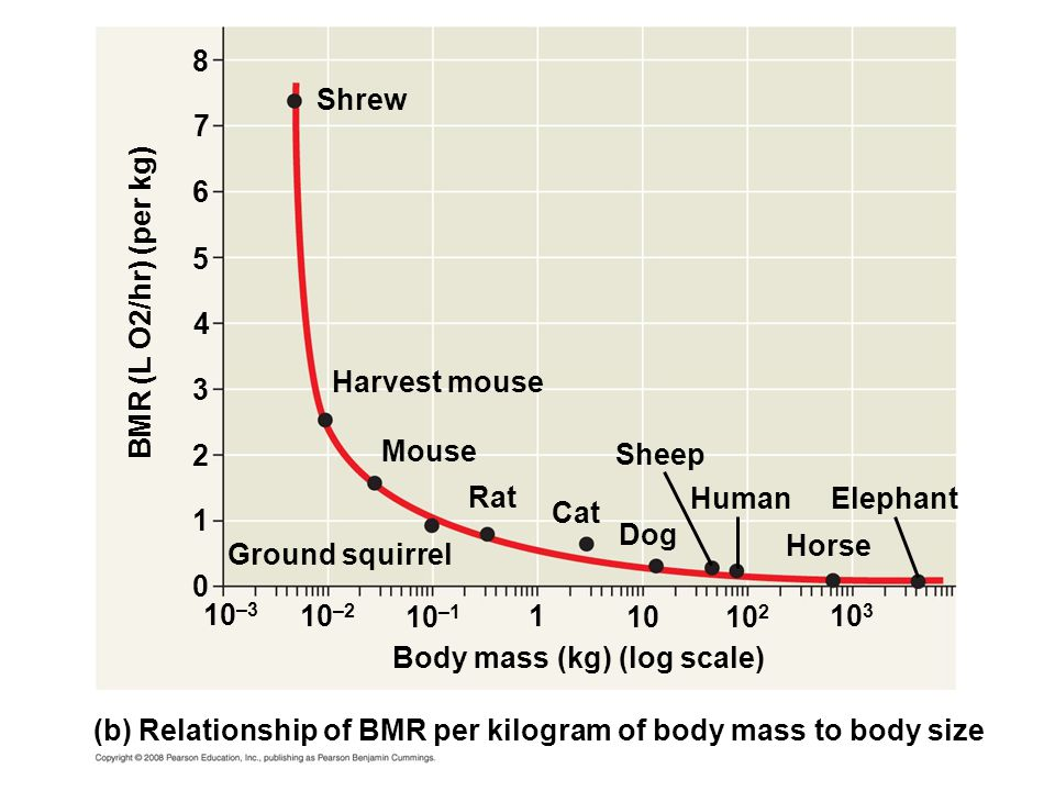 10 2 10 1 10 –1 10 –2 10 –3 0 1 2 3 4 5 6 7 8 Body mass (kg) (log scale) (b) Relationship of BMR per kilogram of body mass to body size BMR (L O2/hr)