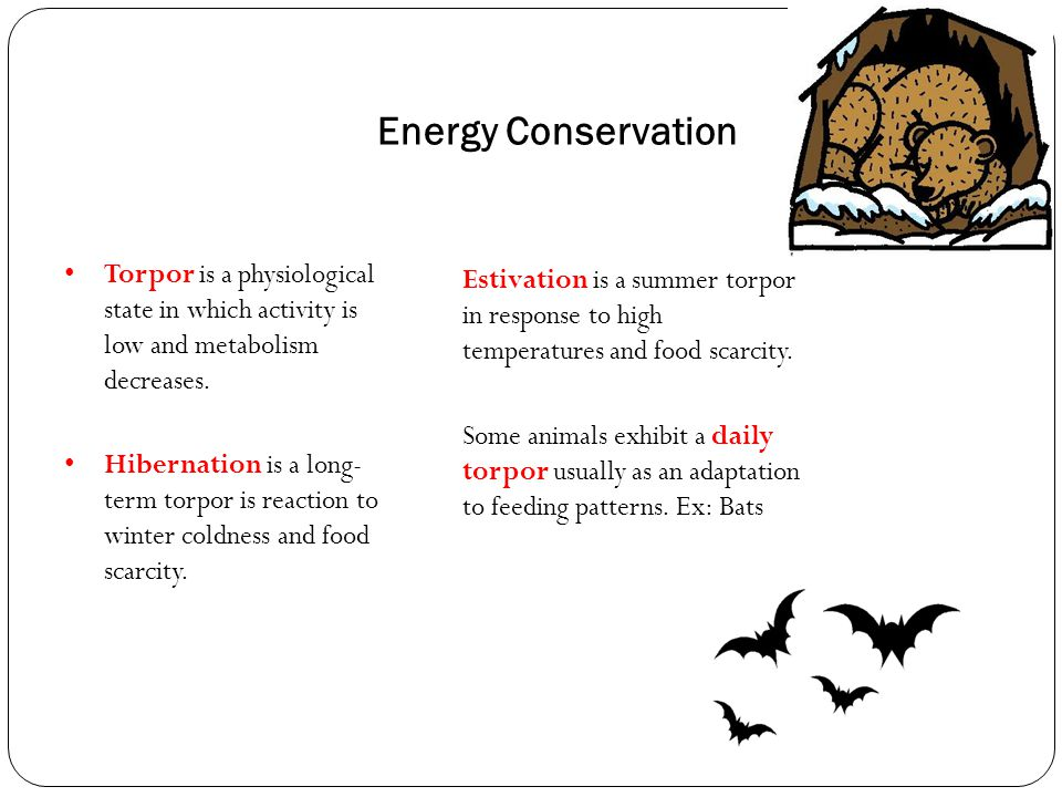 Energy Conservation Estivation is a summer torpor in response to high temperatures and food scarcity. Some animals exhibit a daily torpor usually as a