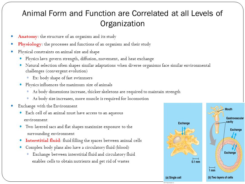 Animal Form and Function are Correlated at all Levels of Organization Anatomy: the structure of an organism and its study Physiology: the processes an