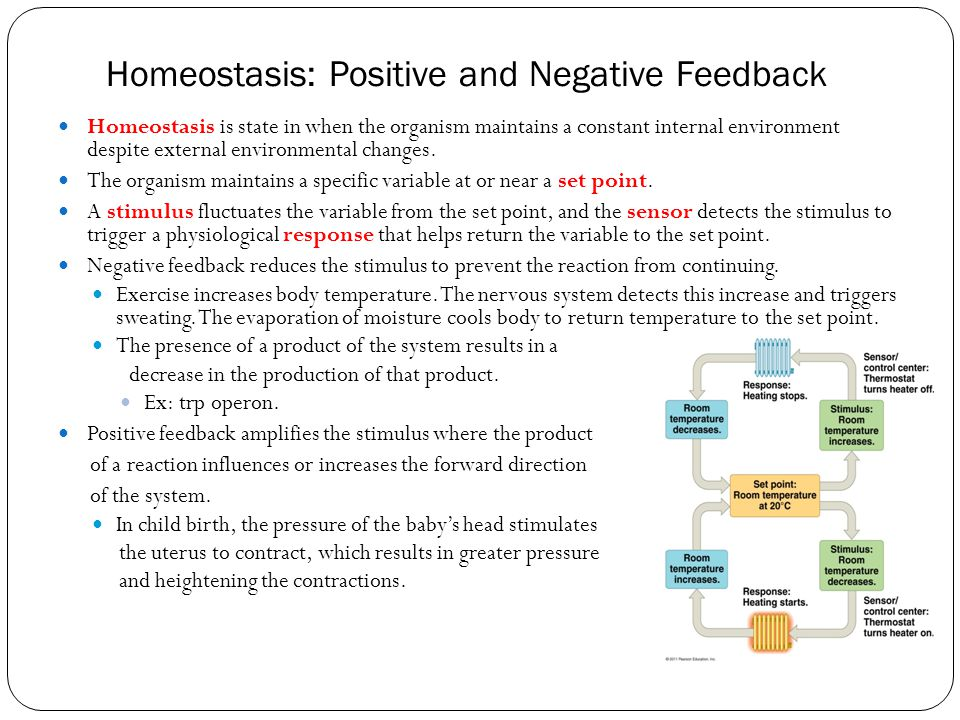 Homeostasis: Positive and Negative Feedback Homeostasis is state in when the organism maintains a constant internal environment despite external envir