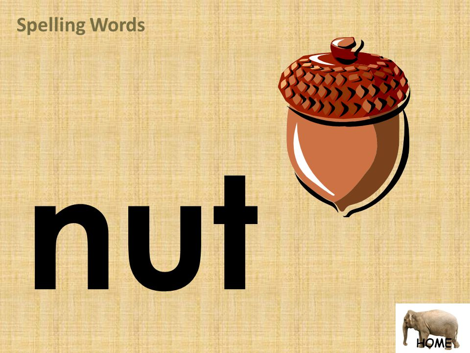 HOME Spelling Words nut