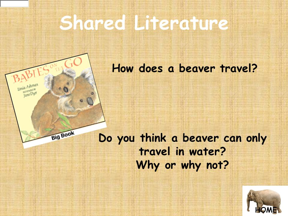Shared Literature How does a beaver travel. Do you think a beaver can only travel in water.