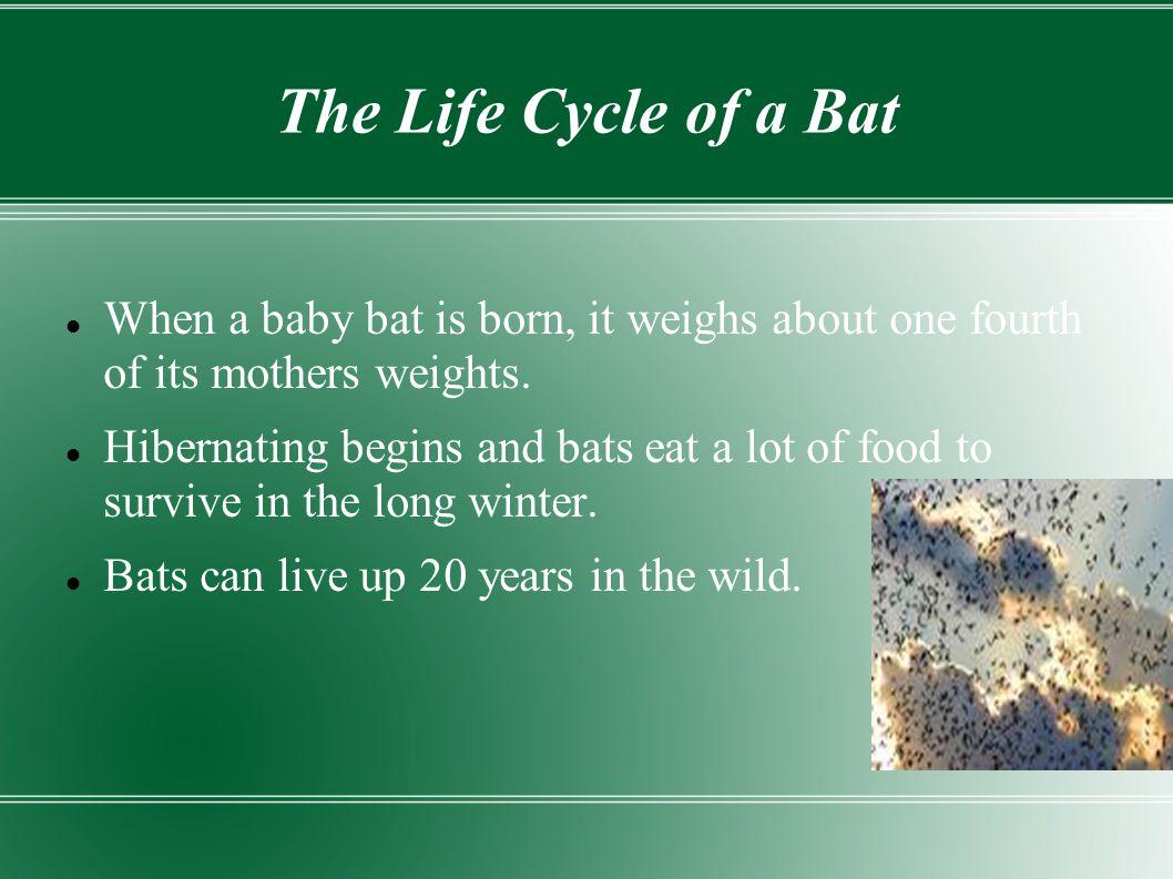 Bats By- Cayman, Savannah, Deepi, Daniel, Austin