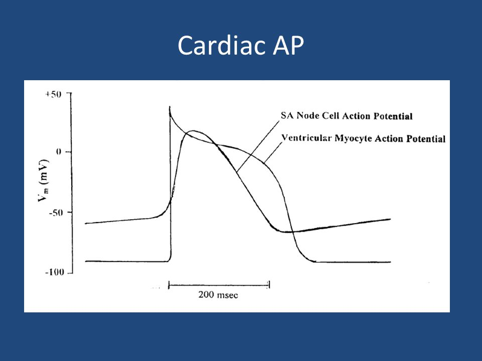 Cardiac AP Pacemaker potential (slow channel) vs myocyte potential ( fast channel ) Pacemaker potential occurs in cells capable of producing spontaneo