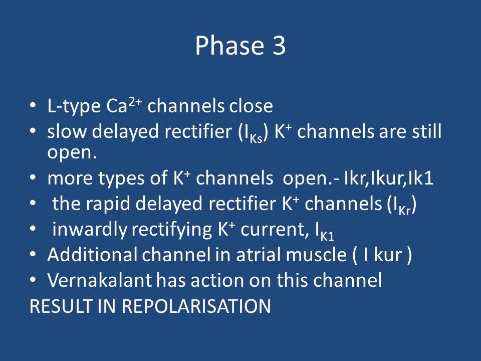 Phase 3 L-type Ca 2+ channels close slow delayed rectifier (I Ks ) K + channels are still open. more types of K + channels open.- Ikr,Ikur,Ik1 the rap