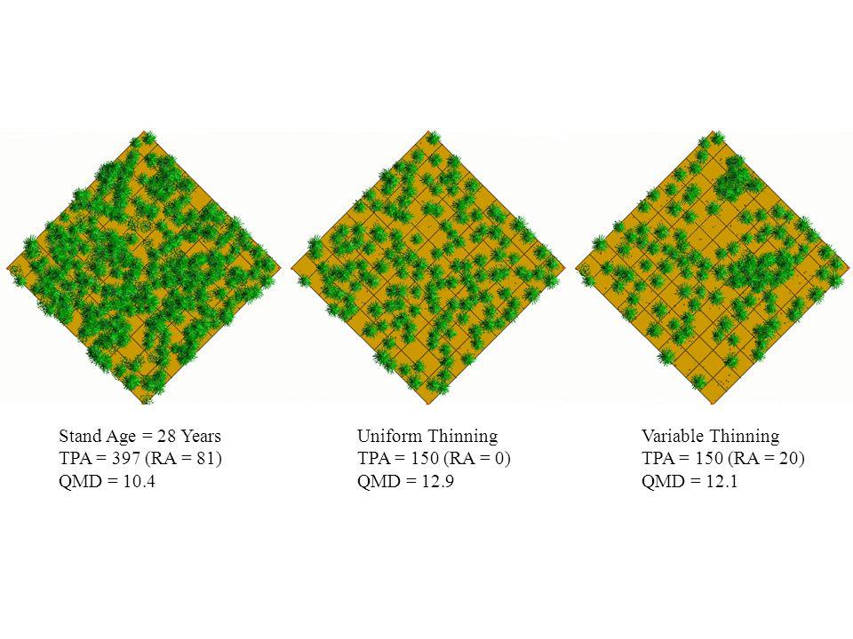 Stand Age = 28 Years TPA = 397 (RA = 81) QMD = 10.4 Uniform Thinning TPA = 150 (RA = 0) QMD = 12.9 Variable Thinning TPA = 150 (RA = 20) QMD = 12.1
