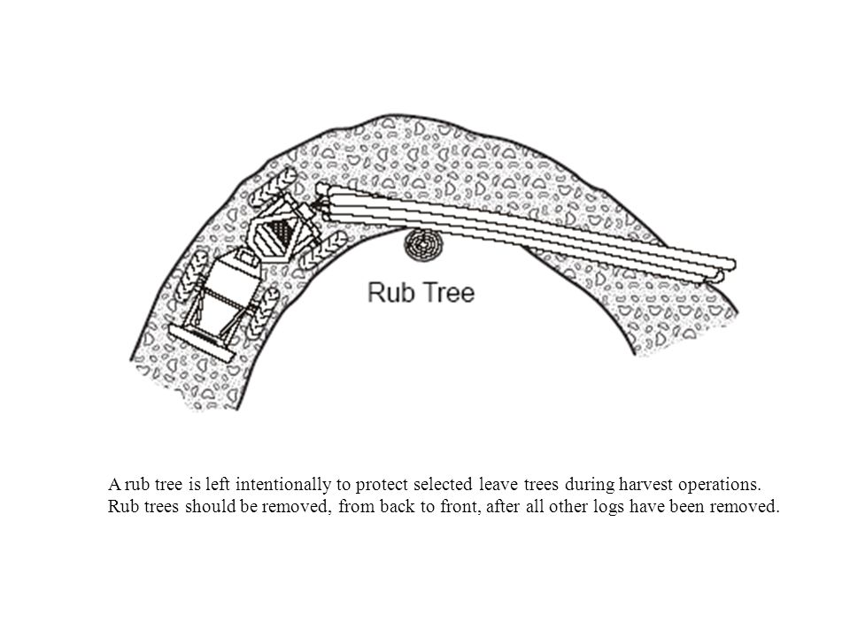 A rub tree is left intentionally to protect selected leave trees during harvest operations. Rub trees should be removed, from back to front, after all