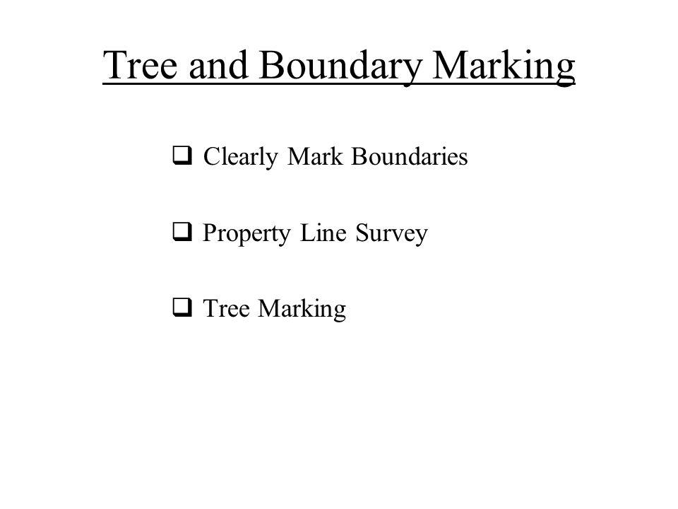 Tree and Boundary Marking  Clearly Mark Boundaries  Property Line Survey  Tree Marking