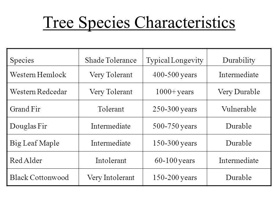 Tree Species Characteristics SpeciesShade ToleranceTypical LongevityDurability Western HemlockVery Tolerant400-500 yearsIntermediate Western RedcedarV