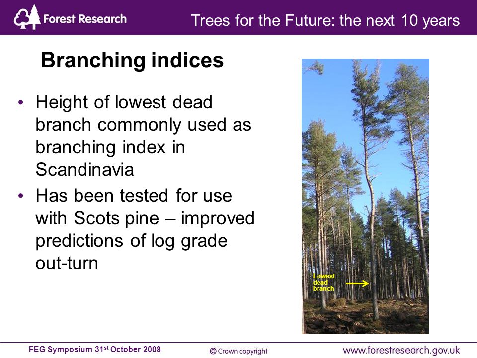 FEG Symposium 31 st October 2008 Branching indices Height of lowest dead branch commonly used as branching index in Scandinavia Has been tested for use with Scots pine – improved predictions of log grade out-turn Lowest dead branch Trees for the Future: the next 10 years
