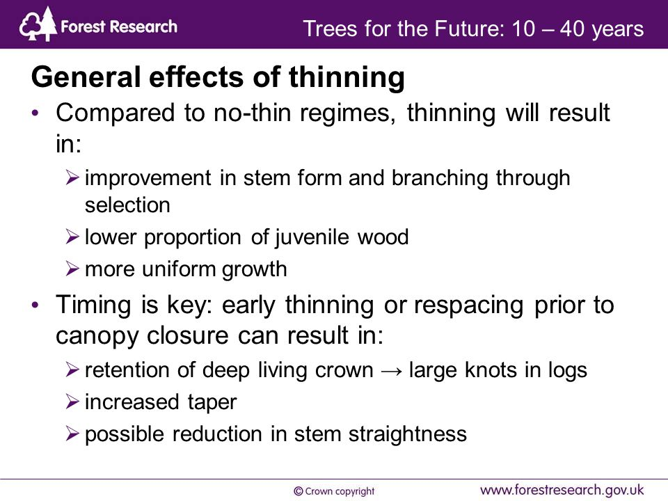 General effects of thinning Compared to no-thin regimes, thinning will result in:  improvement in stem form and branching through selection  lower proportion of juvenile wood  more uniform growth Timing is key: early thinning or respacing prior to canopy closure can result in:  retention of deep living crown → large knots in logs  increased taper  possible reduction in stem straightness Trees for the Future: 10 – 40 years