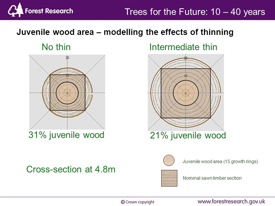 Juvenile wood area – modelling the effects of thinning Juvenile wood area (15 growth rings) Nominal sawn timber section No thin Intermediate thin 31% juvenile wood 21% juvenile wood Cross-section at 4.8m Trees for the Future: 10 – 40 years