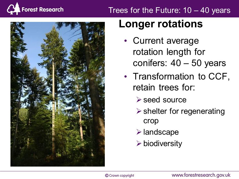 Current average rotation length for conifers: 40 – 50 years Transformation to CCF, retain trees for:  seed source  shelter for regenerating crop  landscape  biodiversity Longer rotations Trees for the Future: 10 – 40 years
