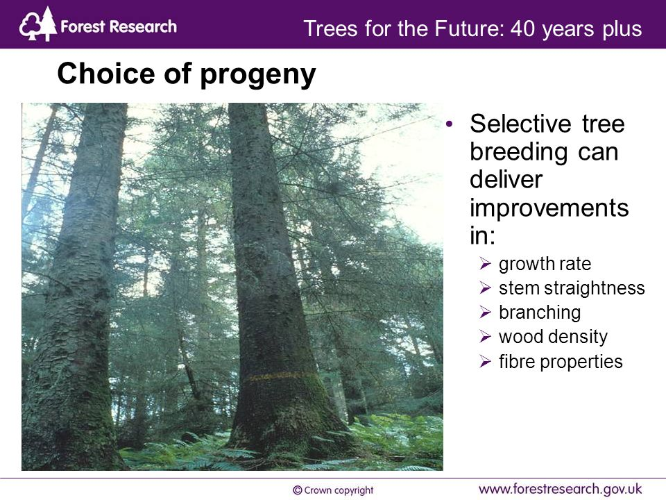 Choice of progeny Selective tree breeding can deliver improvements in:  growth rate  stem straightness  branching  wood density  fibre properties Trees for the Future: 40 years plus