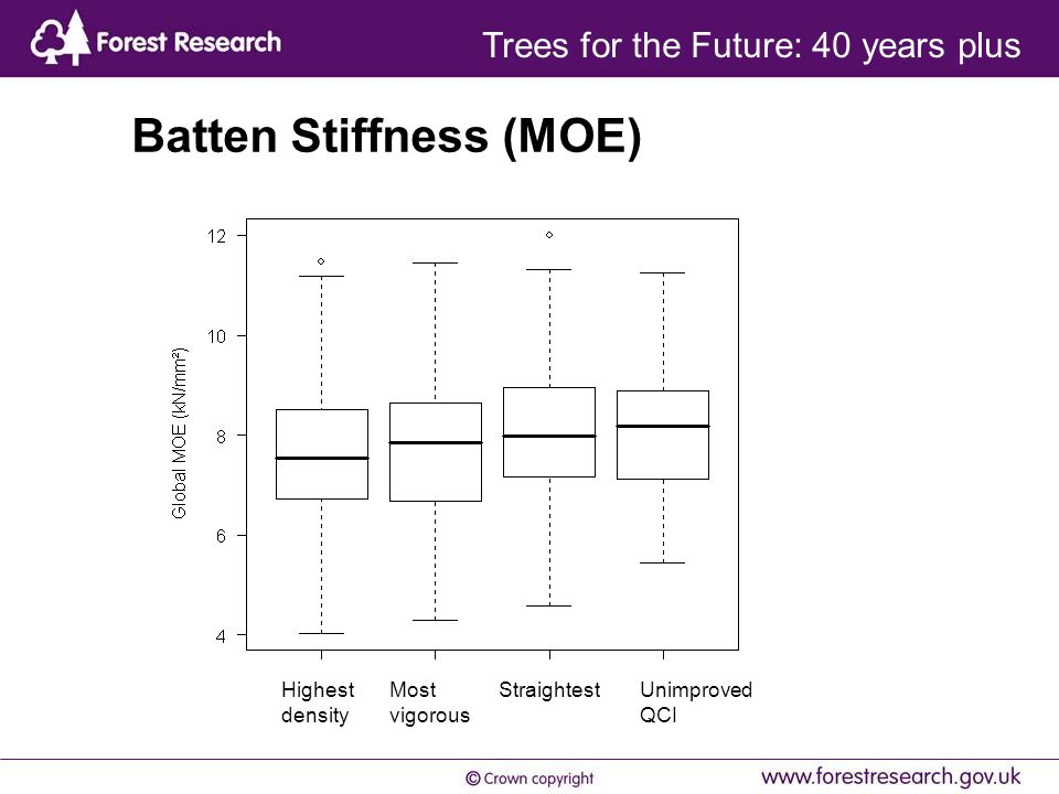 Batten Stiffness (MOE) Highest density Most vigorous Straightest Unimproved QCI Trees for the Future: 40 years plus