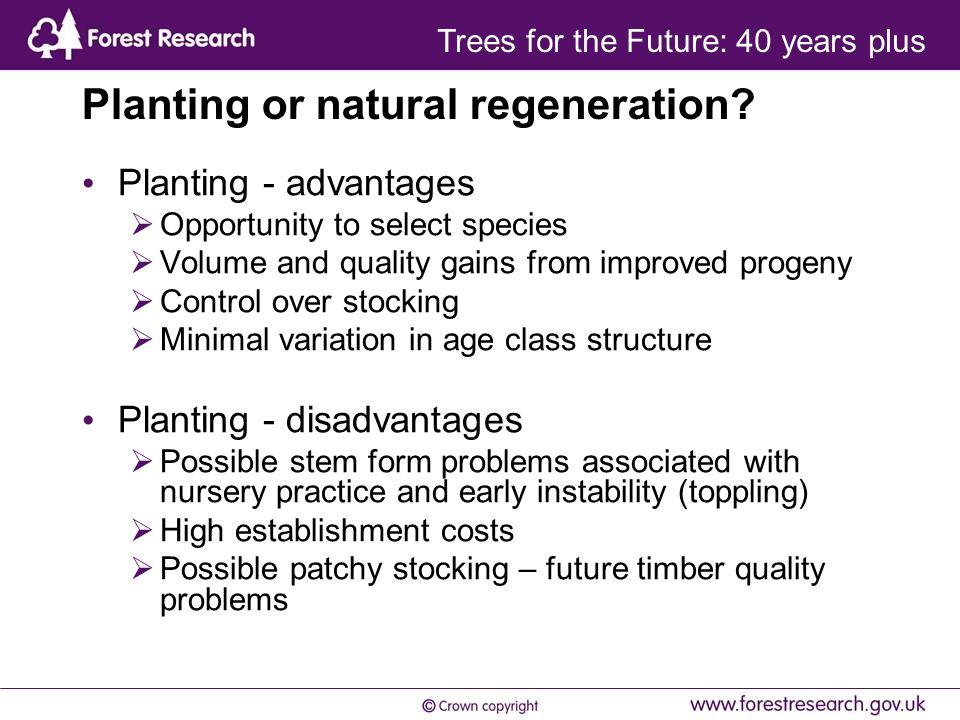 Planting or natural regeneration.