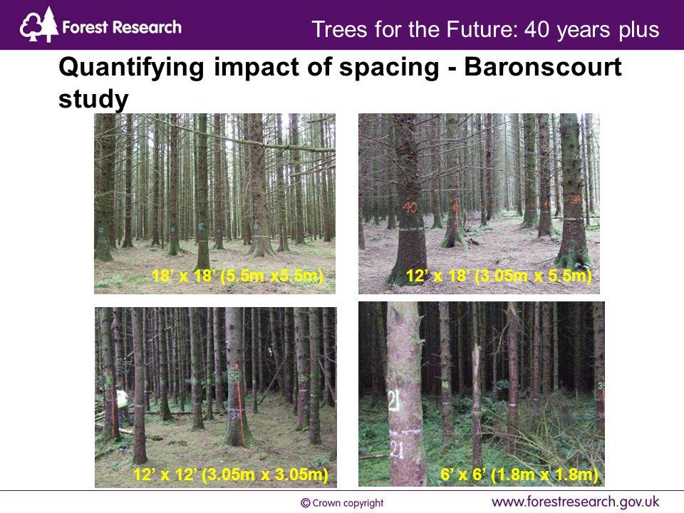 Quantifying impact of spacing - Baronscourt study 12' x 12' (3.05m x 3.05m) 12' x 18' (3.05m x 5.5m)18' x 18' (5.5m x5.5m) 6' x 6' (1.8m x 1.8m) Trees for the Future: 40 years plus