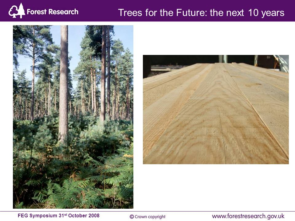 FEG Symposium 31 st October 2008 Trees for the Future: the next 10 years
