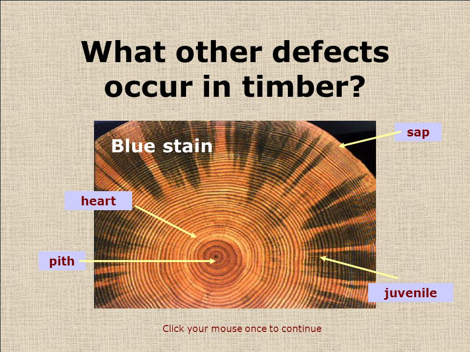 What other defects occur in timber? Click your mouse once to continue Insect attack