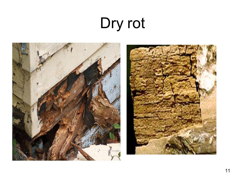11 Dry rot