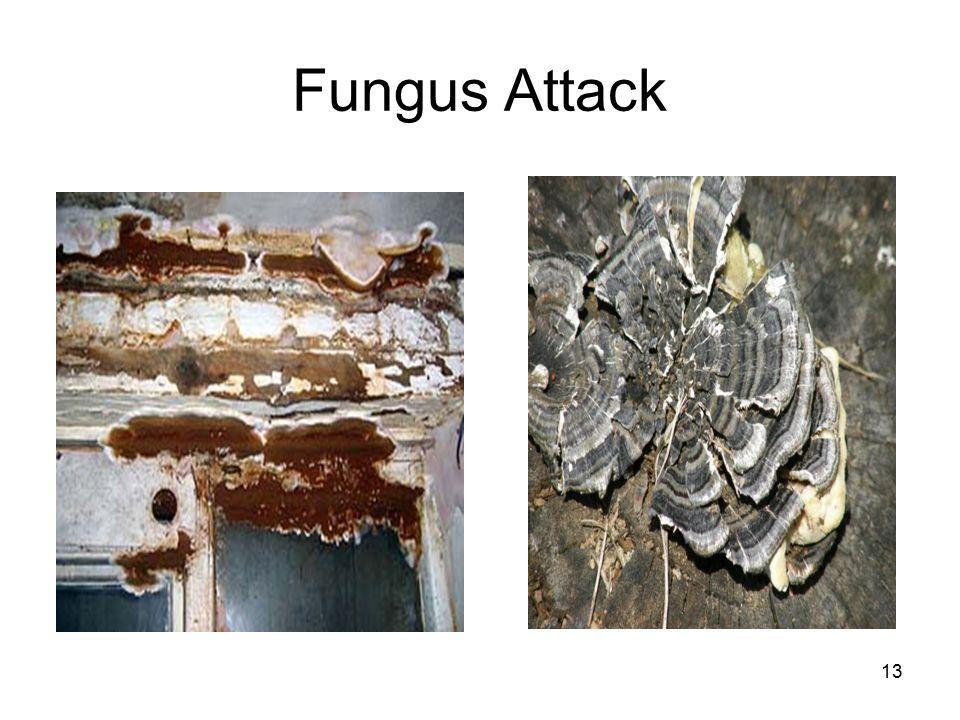13 Fungus Attack