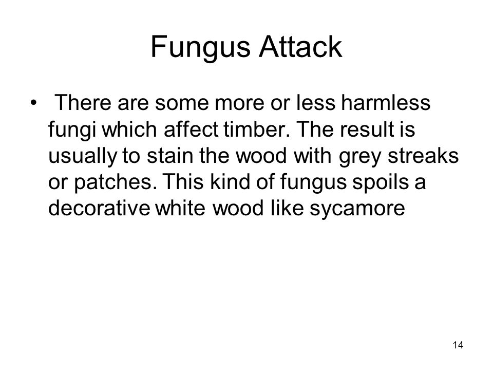 14 Fungus Attack There are some more or less harmless fungi which affect timber.