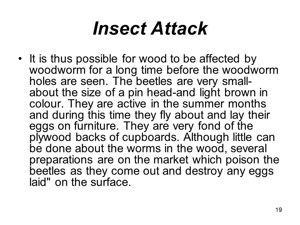 19 Insect Attack It is thus possible for wood to be affected by woodworm for a long time before the woodworm holes are seen.