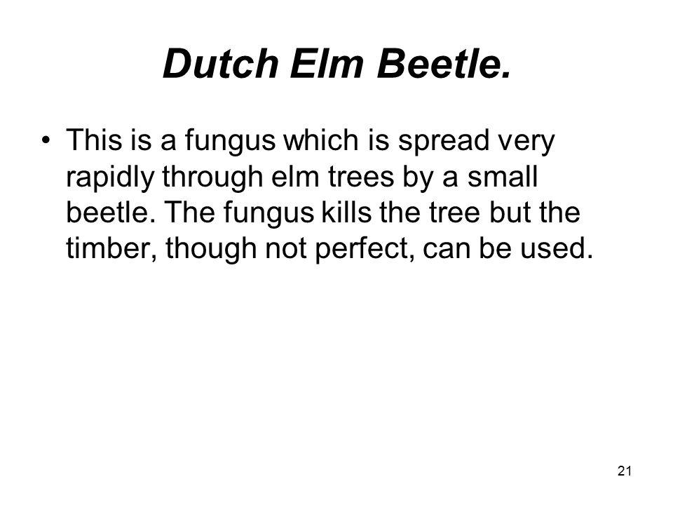 21 Dutch Elm Beetle.