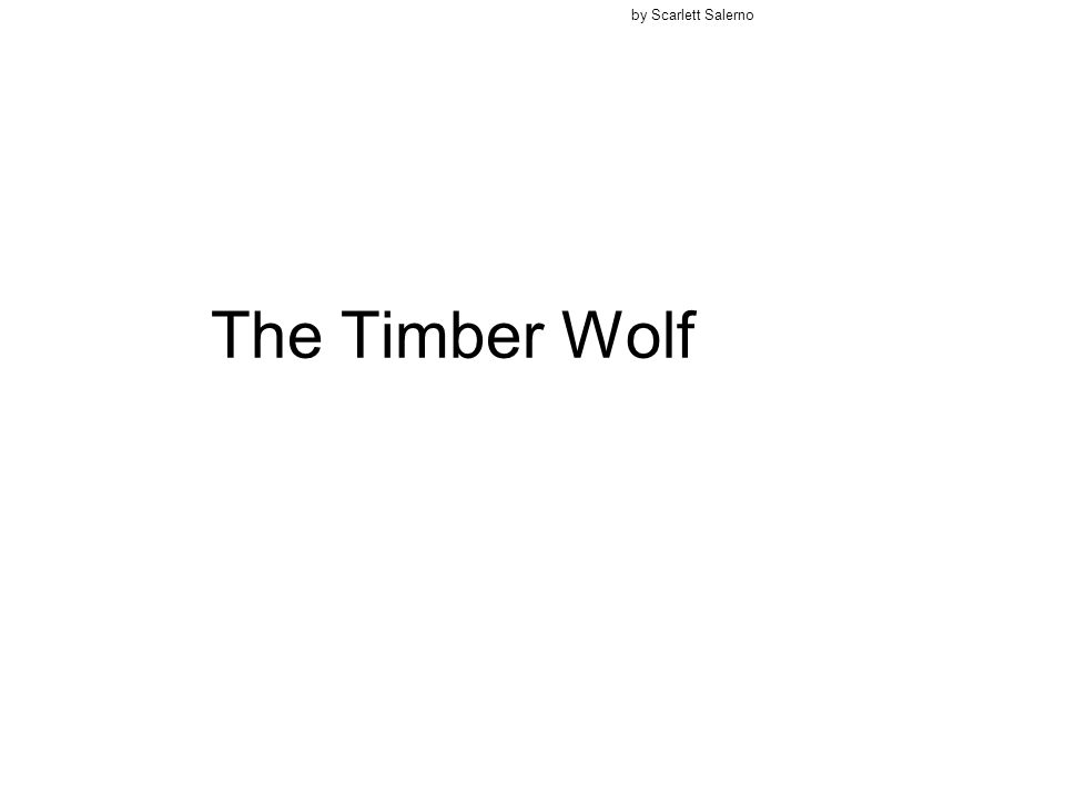 The Timber Wolf by Scarlett Salerno