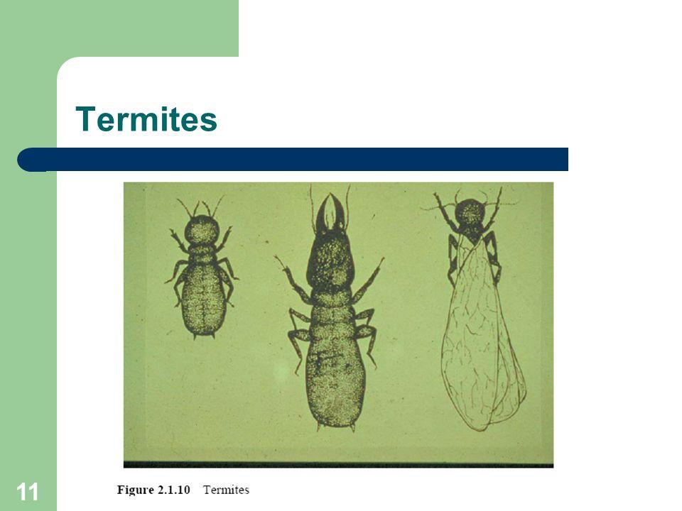 11 Termites