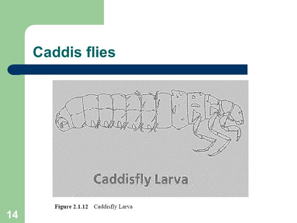 14 Caddis flies