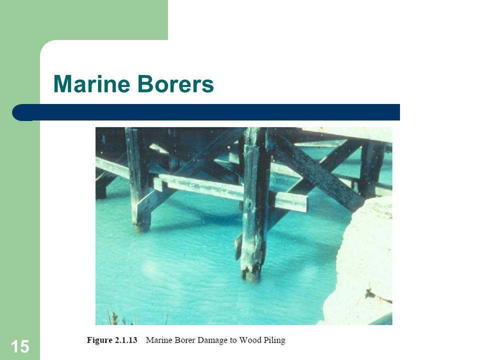 15 Marine Borers