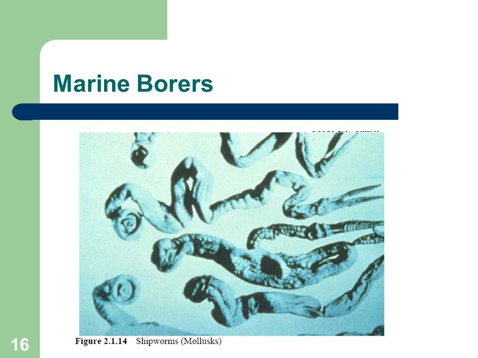 16 Marine Borers
