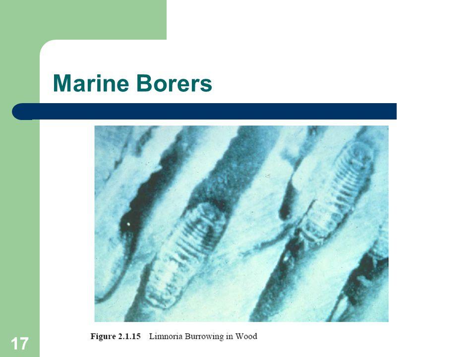 17 Marine Borers