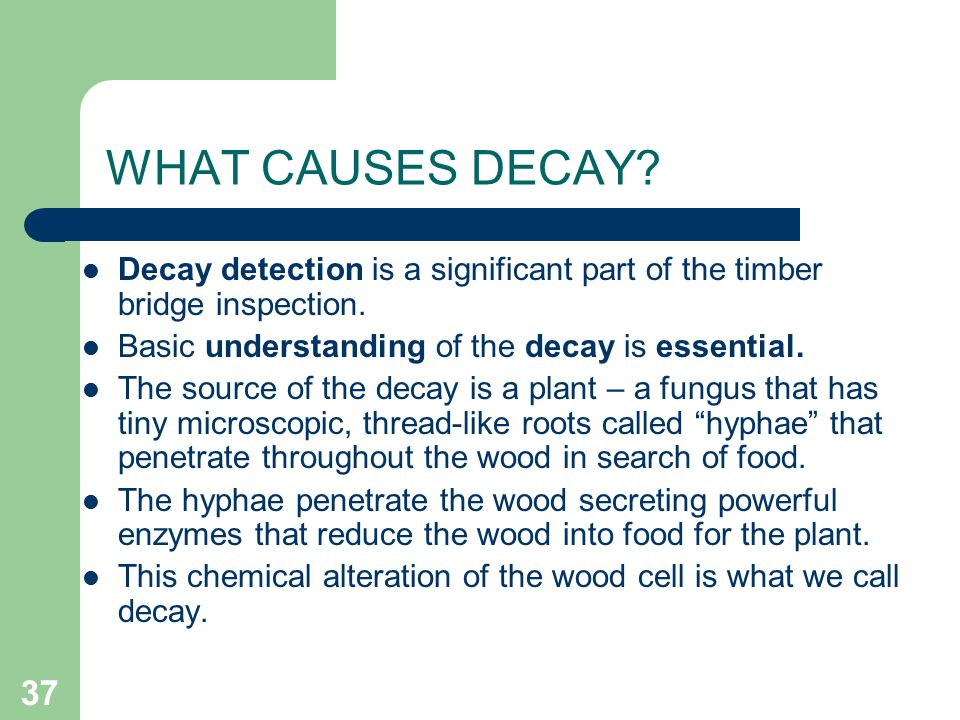 37 WHAT CAUSES DECAY? Decay detection is a significant part of the timber bridge inspection. Basic understanding of the decay is essential. The source