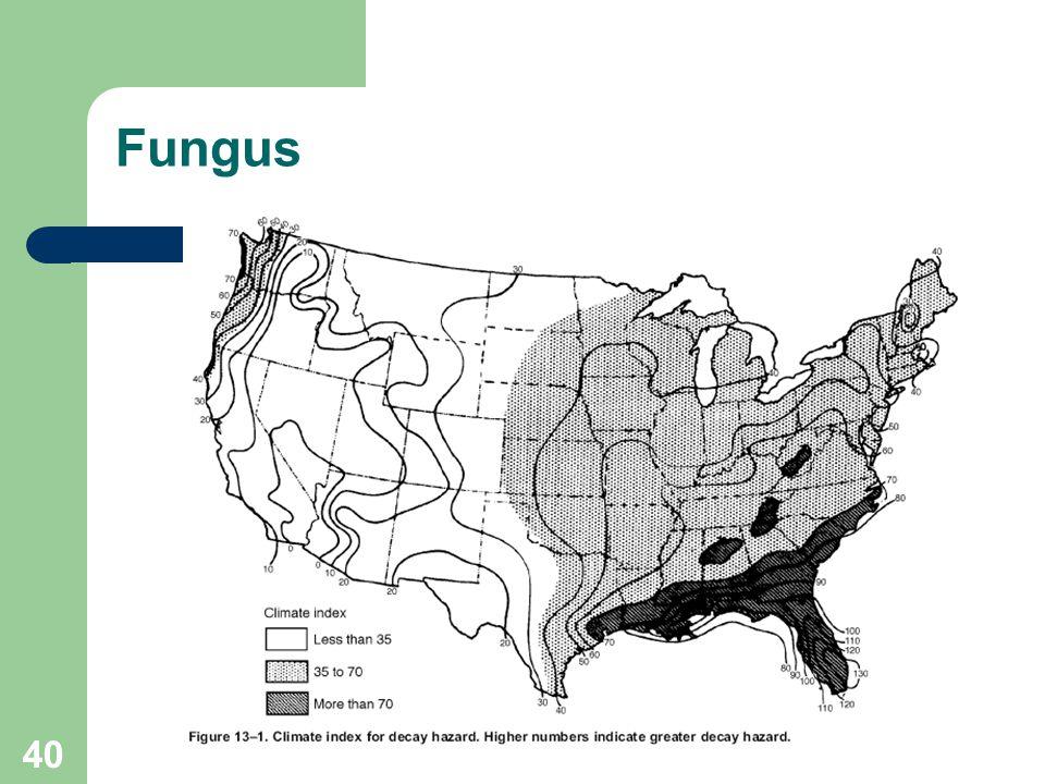40 Fungus