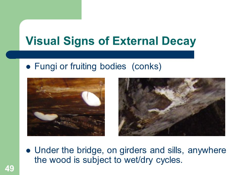 49 Visual Signs of External Decay Fungi or fruiting bodies (conks) Under the bridge, on girders and sills, anywhere the wood is subject to wet/dry cyc