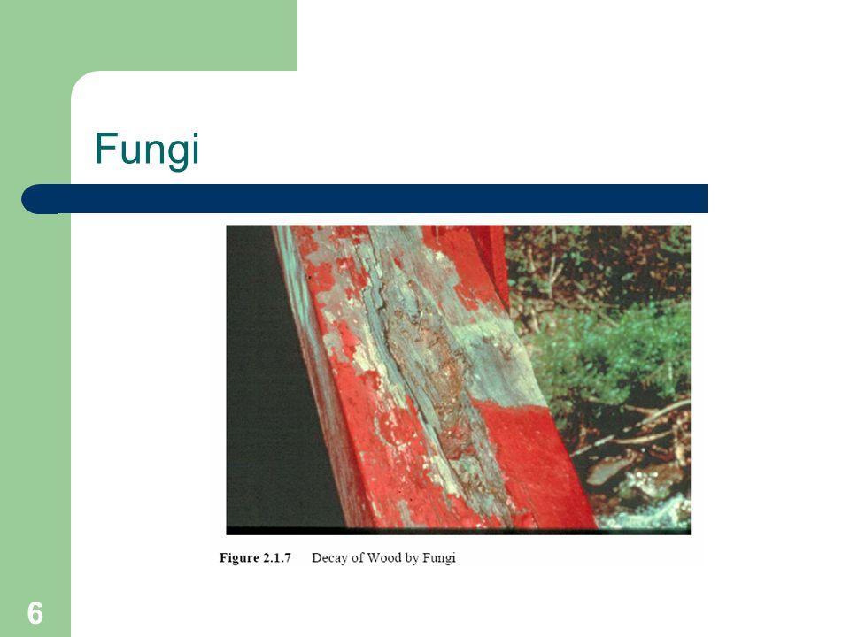6 Fungi