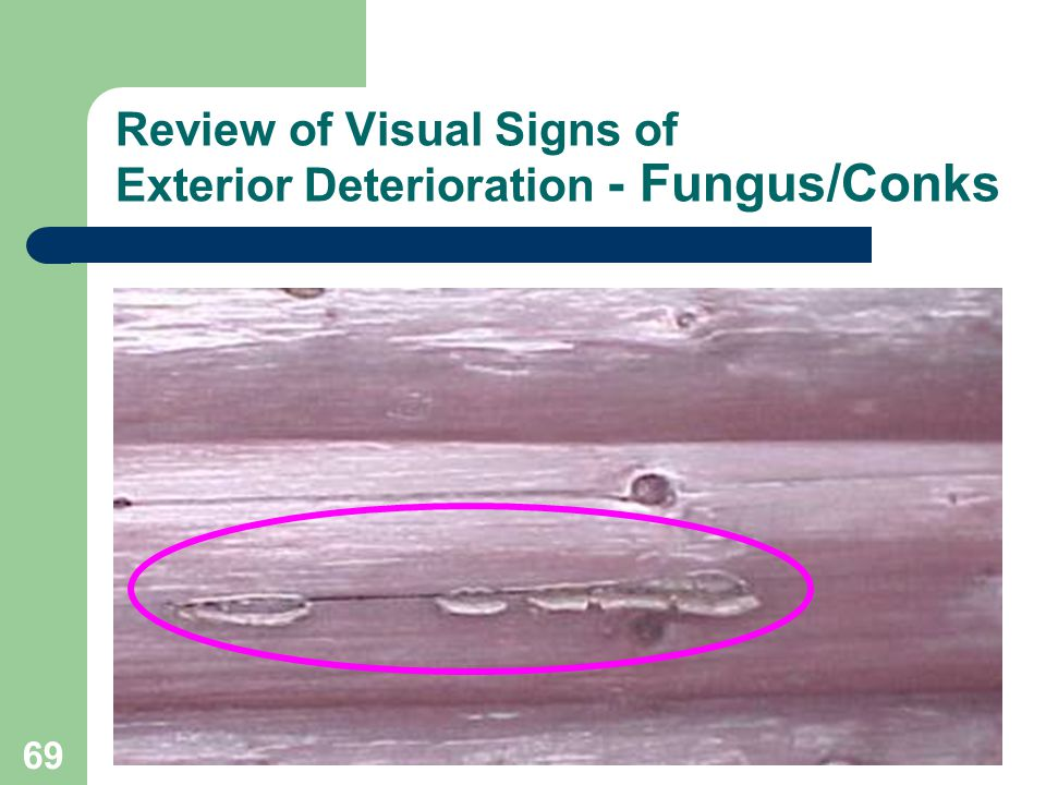 69 Review of Visual Signs of Exterior Deterioration - Fungus/Conks