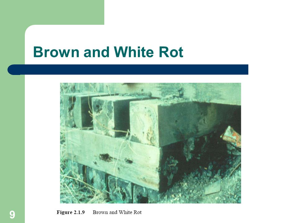 9 Brown and White Rot