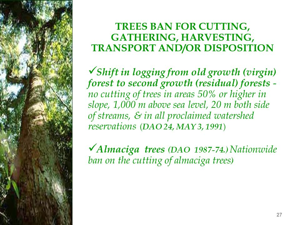 27 TREES BAN FOR CUTTING, GATHERING, HARVESTING, TRANSPORT AND/OR DISPOSITION Shift in logging from old growth (virgin) forest to second growth (resid
