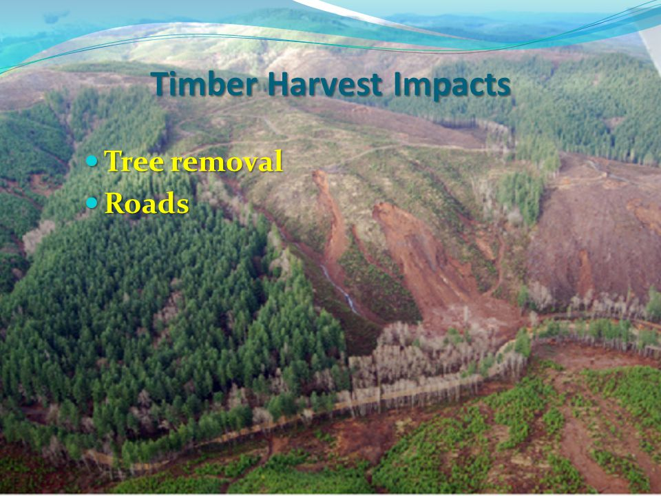 Tree removal Tree removal Roads Roads Timber Harvest Impacts