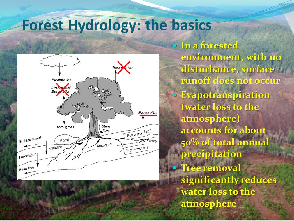 Forest Hydrology: the basics In a forested environment, with no disturbance, surface runoff does not occur In a forested environment, with no disturbance, surface runoff does not occur Evapotranspiration (water loss to the atmosphere) accounts for about 50% of total annual precipitation Evapotranspiration (water loss to the atmosphere) accounts for about 50% of total annual precipitation Tree removal significantly reduces water loss to the atmosphere Tree removal significantly reduces water loss to the atmosphere