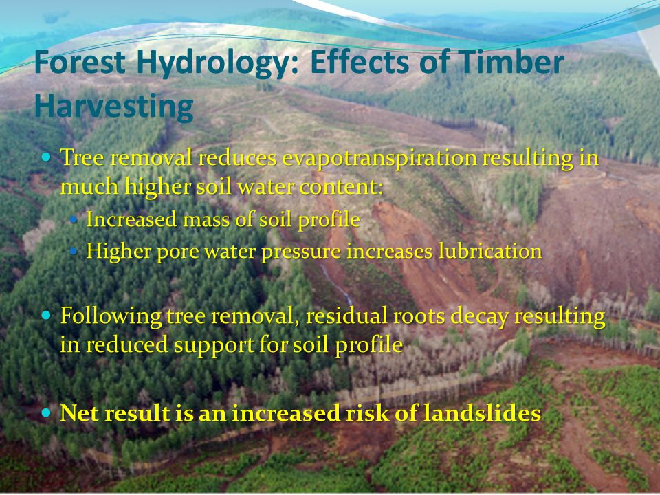 Forest Hydrology: Effects of Timber Harvesting Tree removal reduces evapotranspiration resulting in much higher soil water content: Tree removal reduces evapotranspiration resulting in much higher soil water content: Increased mass of soil profile Increased mass of soil profile Higher pore water pressure increases lubrication Higher pore water pressure increases lubrication Following tree removal, residual roots decay resulting in reduced support for soil profile Following tree removal, residual roots decay resulting in reduced support for soil profile Net result is an increased risk of landslides Net result is an increased risk of landslides