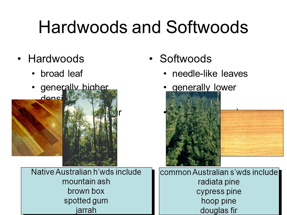 Hardwoods and Softwoods Hardwoods broad leaf generally higher densities often dark in colour Softwoods needle-like leaves generally lower densities of