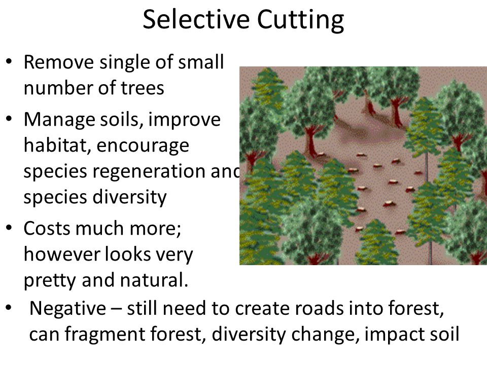 Selective Cutting Remove single of small number of trees Manage soils, improve habitat, encourage species regeneration and species diversity Costs much more; however looks very pretty and natural.