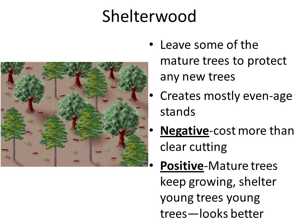 Shelterwood Leave some of the mature trees to protect any new trees Creates mostly even-age stands Negative-cost more than clear cutting Positive-Mature trees keep growing, shelter young trees young trees—looks better